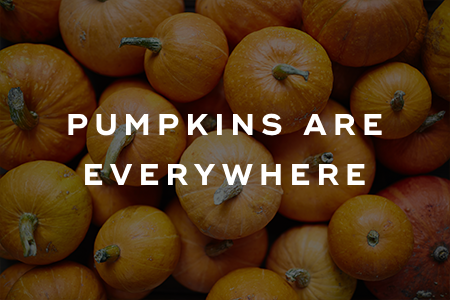 7. Pumpkins are everywhere